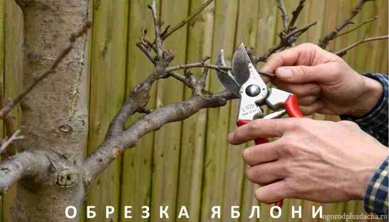"""alt=""""Когда лучше обрезать яблоню весной или осенью"""""""