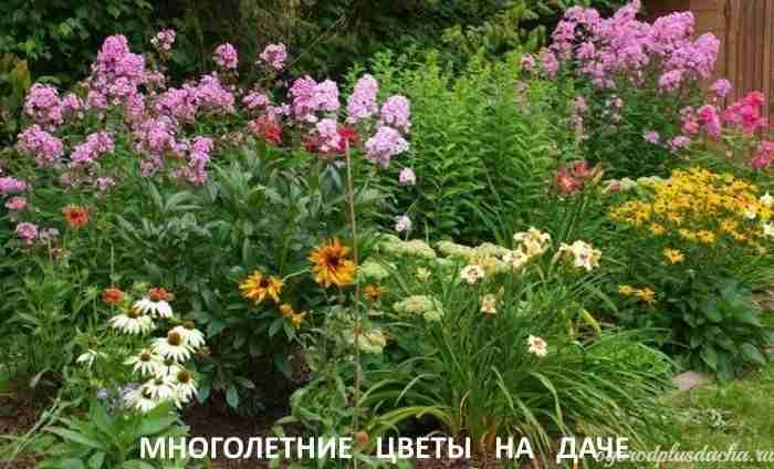 """alt=""""Какие многолетние цветы посадить на даче"""""""