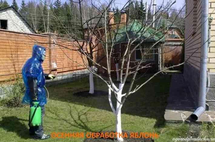 """alt=""""Обработка яблонь осенью"""""""