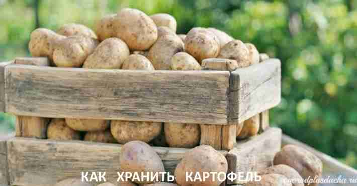 """alt=""""Как сохранить картофель зимой"""""""